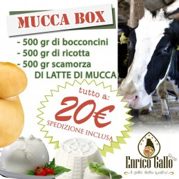 MUCCA BOX